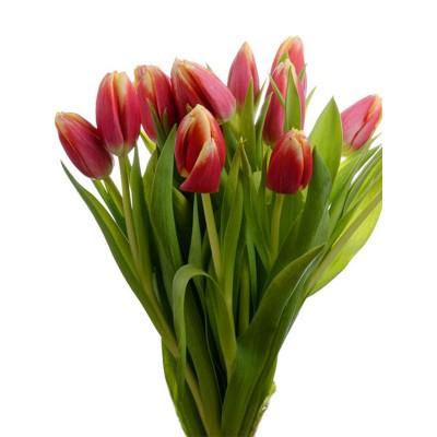 Букет тюльпанов - 51 шт.
