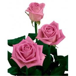 Букет уральских роз 60см - 7 шт.